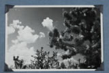 A Mojave desert scene of Johua trees and clouds in the sky.