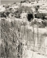 Photograph of White Rock Spring at the Nevada Test Site, post-1960