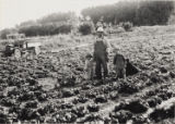 Photograph of Bill Tomiyasu and his children standing in his lettuce patch, Las Vegas, 1923