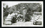 Photograph of a miner with a dog atop sacks of ore (Nev.), 1900-1925
