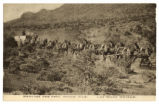 Photograph of mule teams hauling ore through the desert from the Potosi Mine, 1900-1925